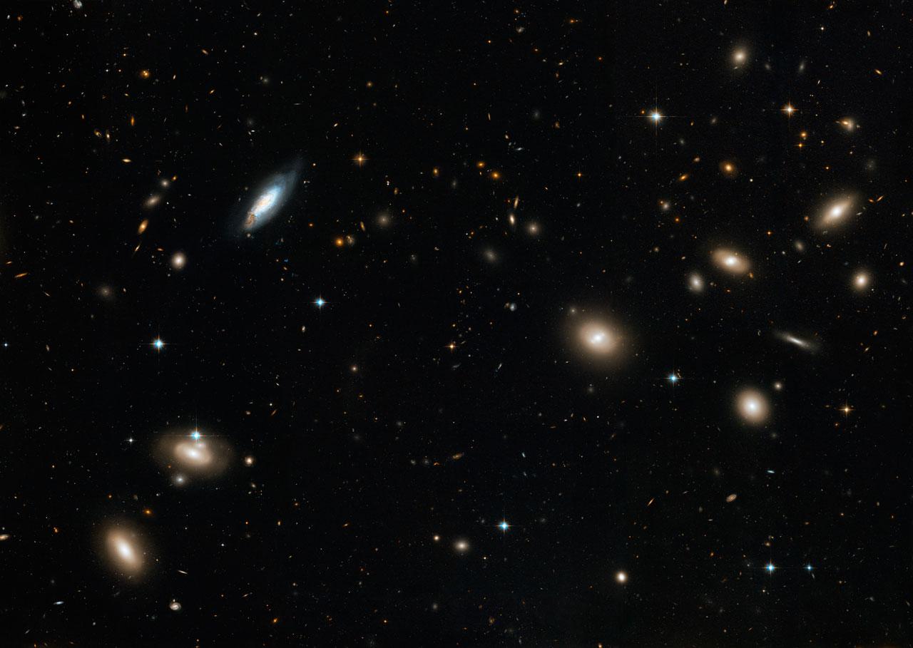 L'amas de galaxies de la Chevelure de Bérénice vu par Hubble
